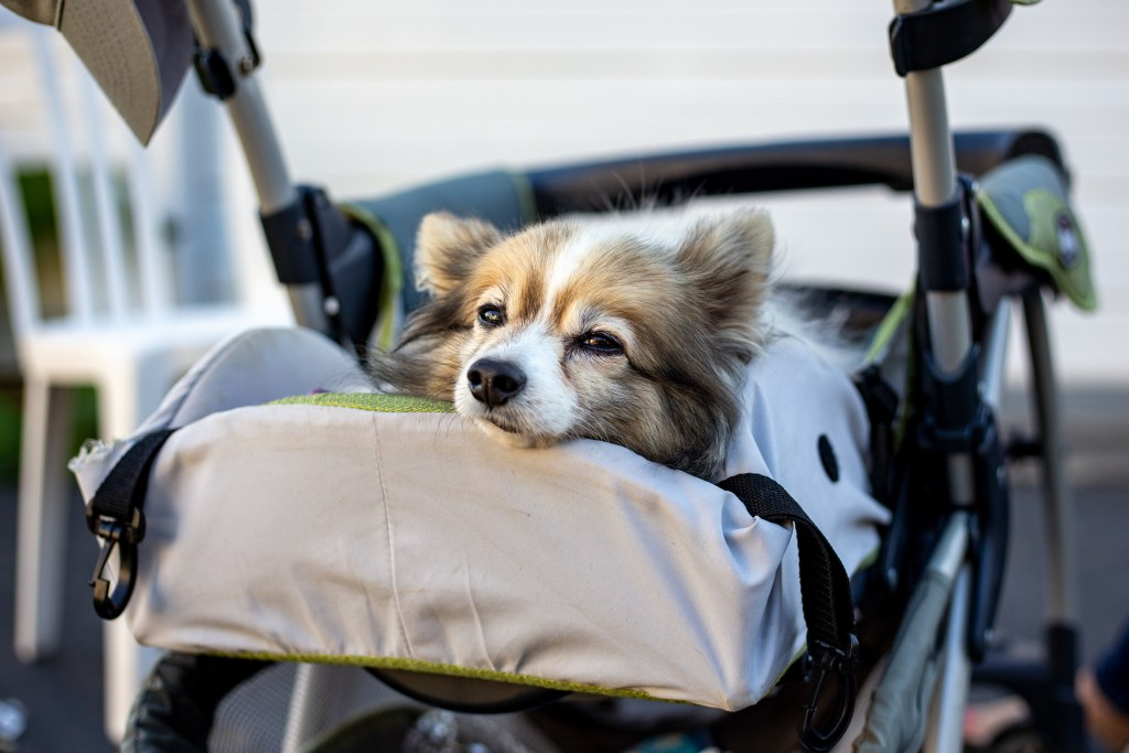A Conversation With Donna About Her Little Special Needs Dog Teddy